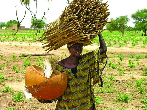 A woman farmer takes home her pearl millet bundle of food security