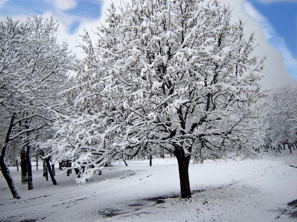 snowy-trees-winter-ice