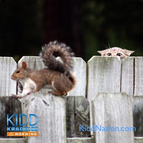 audioboo-template-squirrel-fact