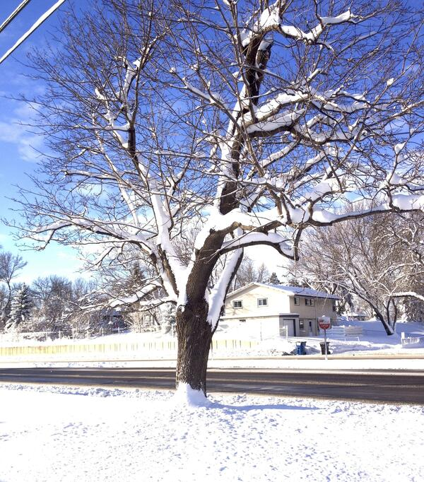 Photo of Bare Tree with Snow