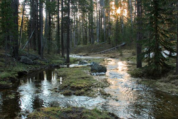 yellowstone brook