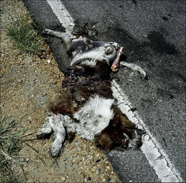 Roadkill Dog