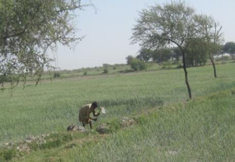 Tree planting helps Pakistani farmers weather floods