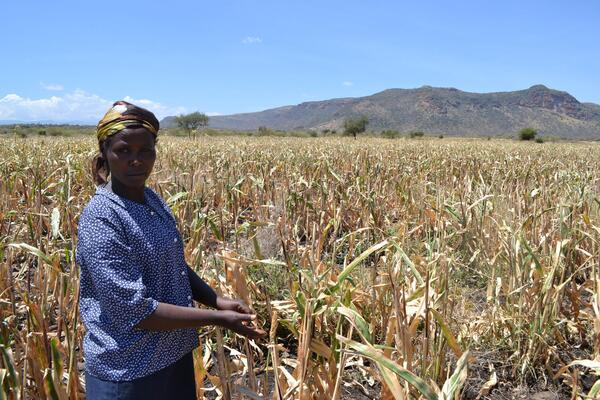 Isiolo Pastoralists turn to farming