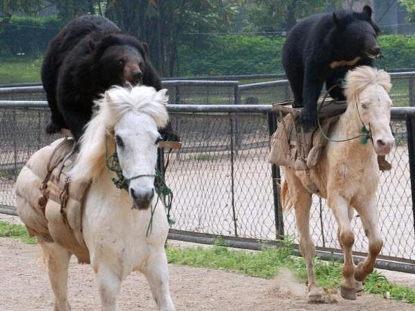 bear-horse-race
