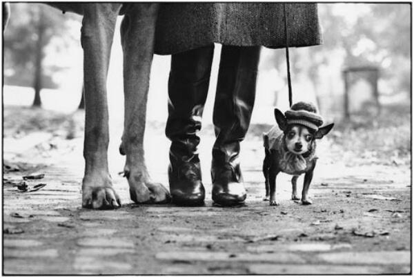 Elliott Erwitt Photo Dog Legs New York City 1974