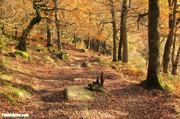 Padley Gorge Autumn