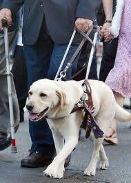 a service dog download