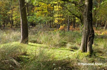 Woodland LongshawEstate creditNationalTrust landscape copy