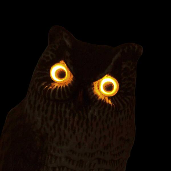 HR493-visualscare-eye-glowing-owl-dark2