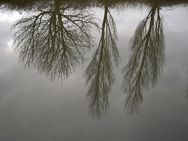 reflect trees