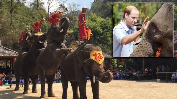 Prince William and Elephant Sanctuary Comp