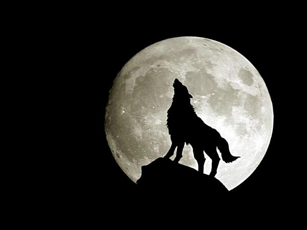 Wolf-wolves-18492909-1600-1200