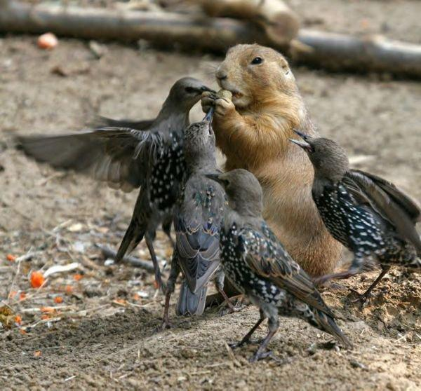 gopher and birds sharing a peanut