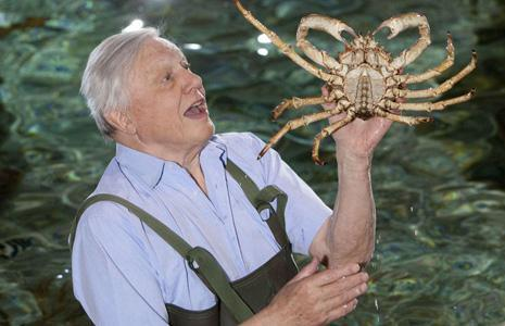 david-attenborough-465-919602543