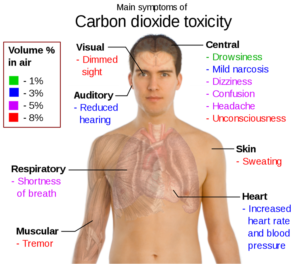 effects carbon monoxide co human body The effects of carbon monoxide and particulates on the human body dale andreatta dandreatta@sealimitedcom nordica maccarty nordicamaccarty@gmailcom introduction in the cookstove community we have now developed the means to accurately measure the concentration of the two primary indoor air pollutants, carbon.