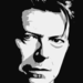 bowie-1152551 1280