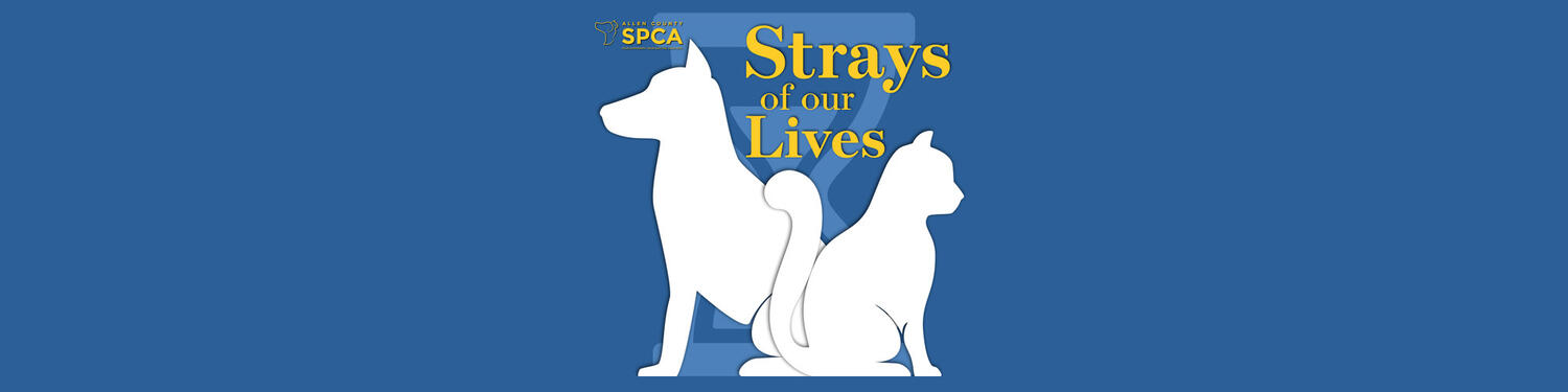 Strays of Our Lives