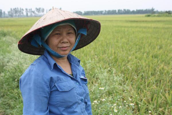 Rice paddy worker