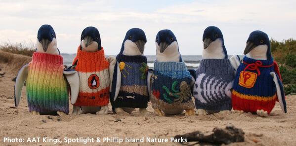 penguin jumpers tweet