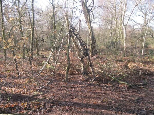 sherwood forest 1